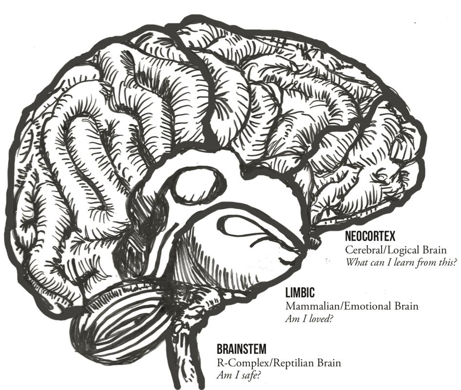 Drawn diagram of the brain.